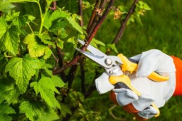 how to maintain native gardens with trimming and pruning