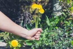 native garden maintenance tips weeding