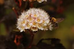 best native plants for pollinators