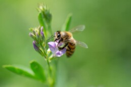 Top Native Pollinator Plants