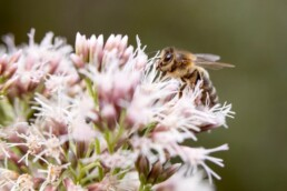 guide on pollinating perennials