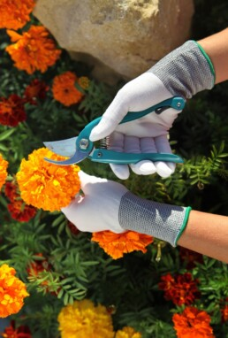best flowers to plant in the fall