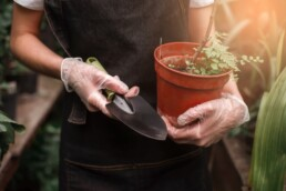 best plants to garden in the fall