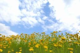 Kansas Native Flowers