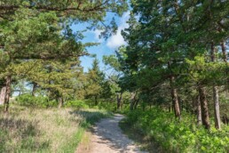 native trees shrubs and parks in Kansas